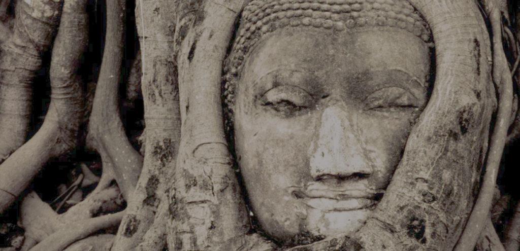 Buddha Head Tree Thailand